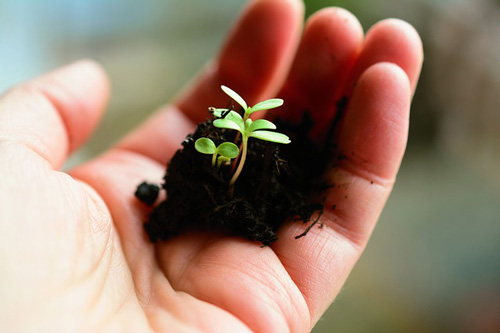 Atelier horticulture/jardinage